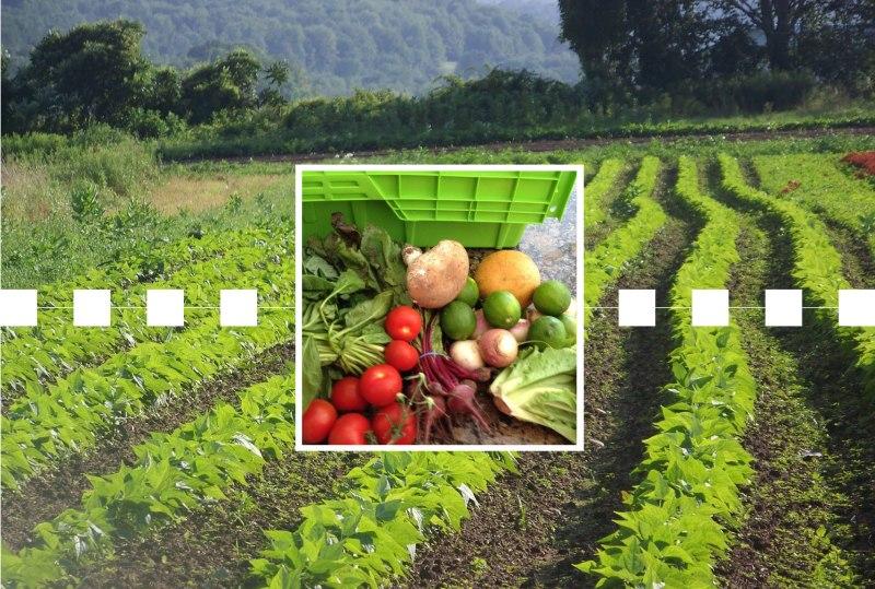 Farm-Blockchain.jpg